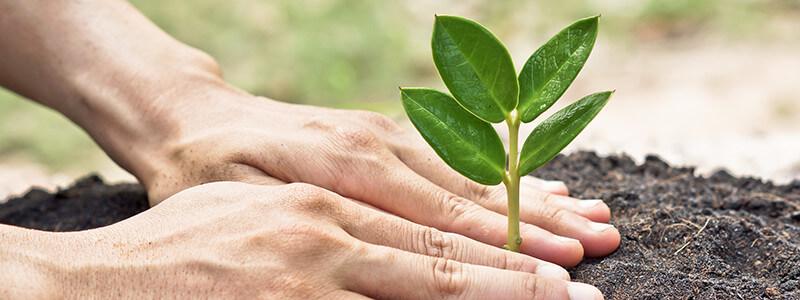 Zwei Hände an einer wachsenden Pflanze